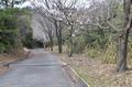 西長尾城跡への道・桜